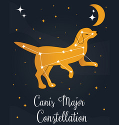 The constellation canis major star in night sky vector