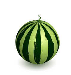 watermelon ripe with shadow vector image