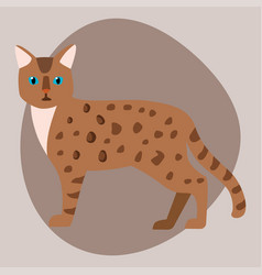 cat breed bengal leopard cute pet brown fluffy vector image vector image