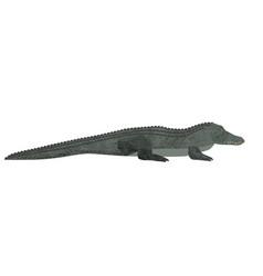 Freshwater crocodile isolated on white background vector