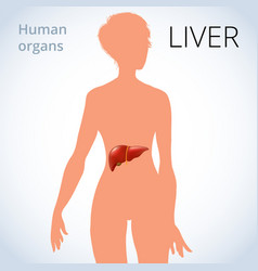 location of the liver in the female body the vector image