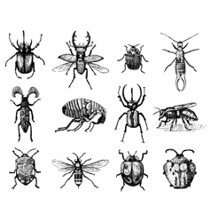 Big set of insects bugs beetles and bees many vector