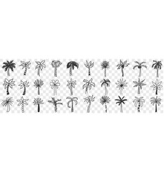 exotic palm trees doodle set vector image