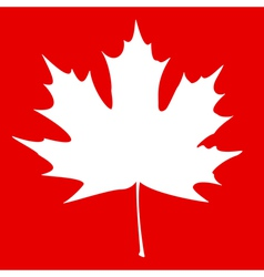 Maple leaf white vector