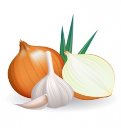 onion and garlic vector image