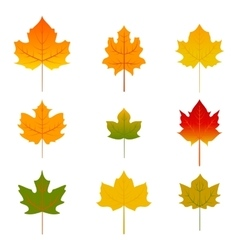 Set of five red and yellow maple leaves isolated vector