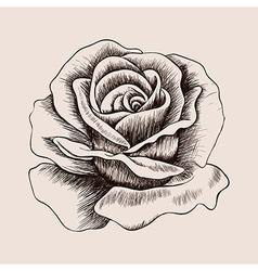 Sketch rose Hand drawn flower vector