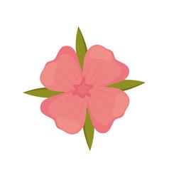 geranium flower decoration image vector image