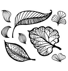 Hand drawn doodle leaf vector image