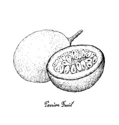 Hand drawn of passion fruit on white background vector