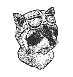 raccoon pilot sketch vector image
