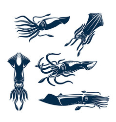 squid sea animal icon set for seafood design vector image