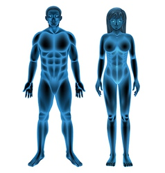 Male female human body vector image vector image