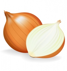 onion vector image vector image