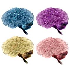 Human brain vector