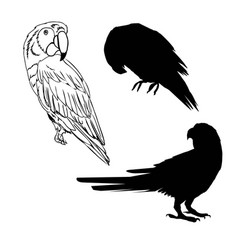 with parrot silhouettes collection isolated on vector image vector image