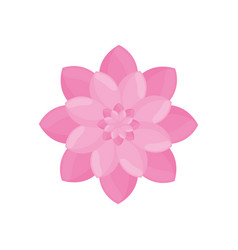 pink flower garden decoration vector image vector image