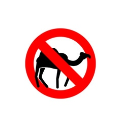 Stop camel Prohibited animal of desert Red vector image vector image