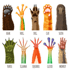 Animal paw animalistic pets claw or hand of vector