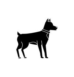 dog animal mammal pet friendly vector image