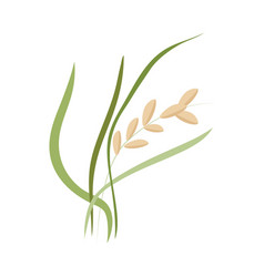 Ear of ripe rice grains on stem with green leaves vector