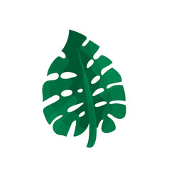 Tropical monstera leaf vector