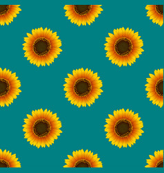 sunflower seamless on green teal background vector image