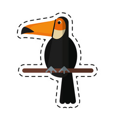 cartoon toucan bird exotic fauna vector image