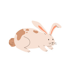 cute spotted rabbit isolated on white background vector image