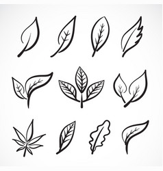 hand drawn leaves isolated on white background vector image