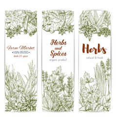 Herbs and spices sketch banners vector