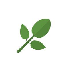 isolated hickory flat icon foliage element vector image