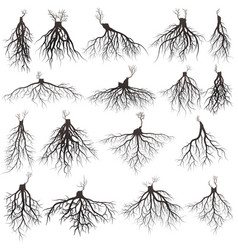 Roots silhouette vector
