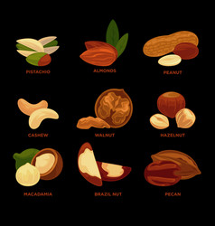 nuts collection with names isolated on black vector image