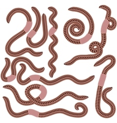 Animal Earth Red Worms for Fishing vector