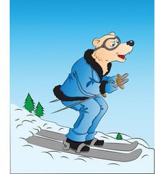 Dog skiing vector