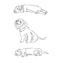 puppies which lies sit lines vector image
