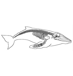 whale Skeleton vector image