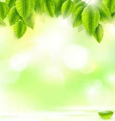 green leaves with abstract natural background vector image