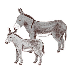 Hand drawn donkey and foal farm animal familie vector