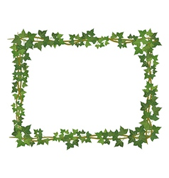 Ivy square frame vector