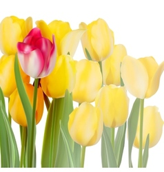 Bunch of tulips isolated on white EPS 10 vector image