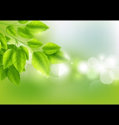 Fresh green leaves with Sunny background vector