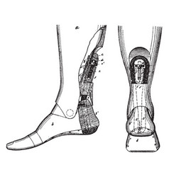 Grooved artificial leg vintage vector