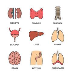Human internal organs color icons set vector