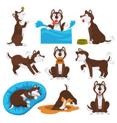 Husky dog cartoon pet playing or training vector