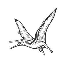 pterodactyl engraving vector image