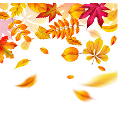 autumn leaves falling yellow red and orange vector image
