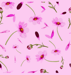 cosmos flowers on pink background-flowers in bloom vector image