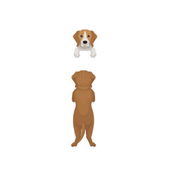 Flat of beagle dog standing on vector
